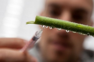 Injecting droplets on plant